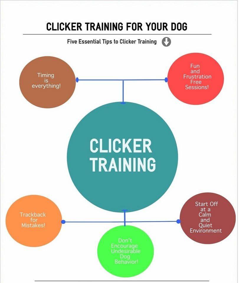 el entrenamiento del clicker perro