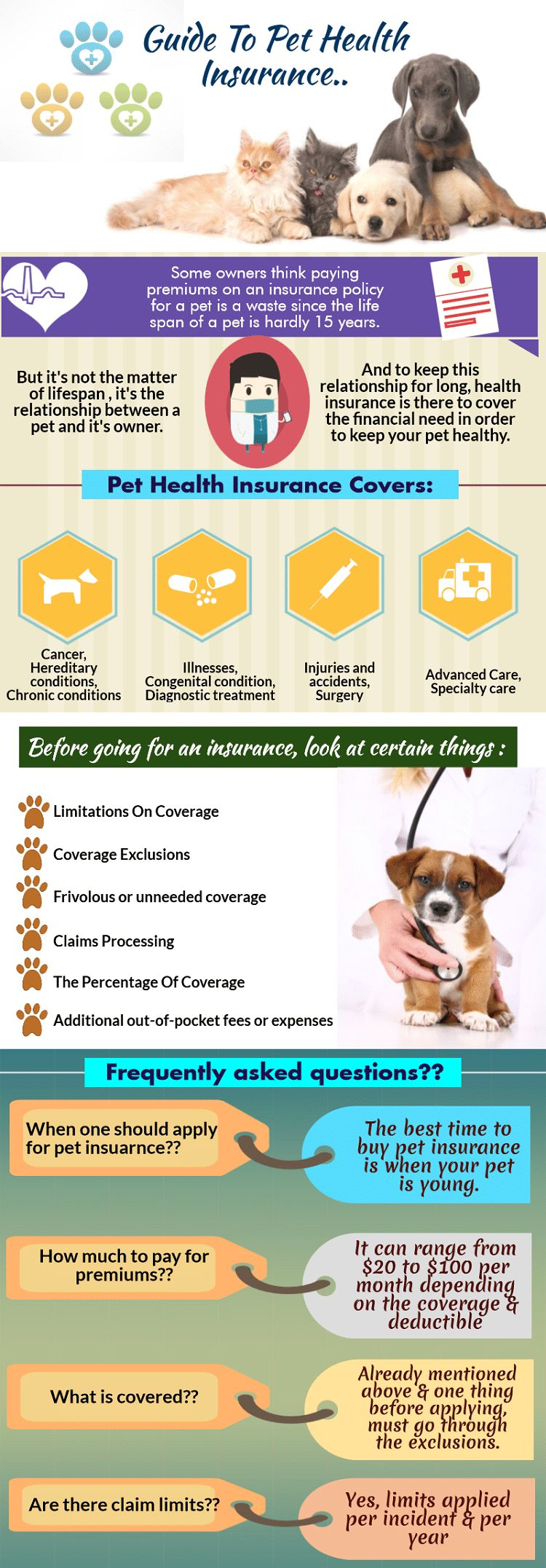 Perro en la terapia de láser frío