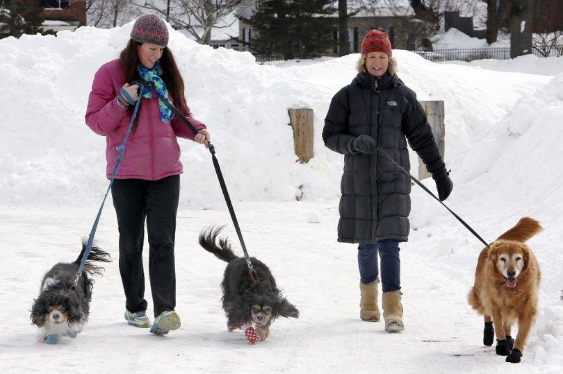 Perros que juegan en la nieve