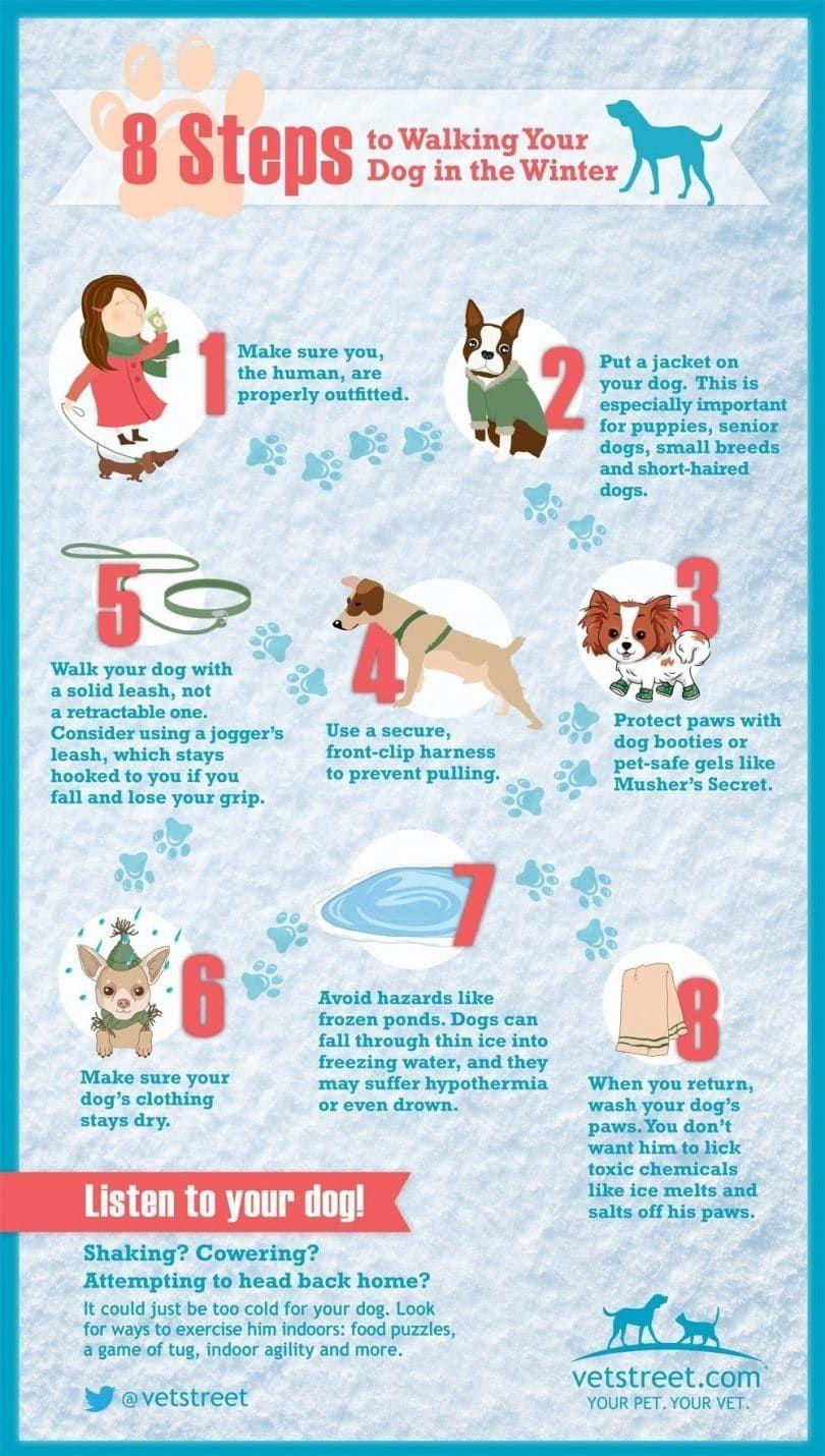 8 pasos para pasear a su perro en invierno