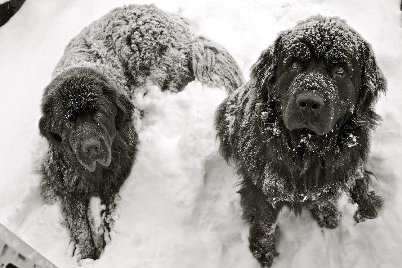 Terranova, en la nieve