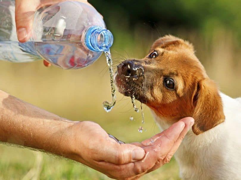 perros deshidratados