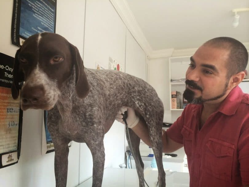 Perro en el veterinario chequeo
