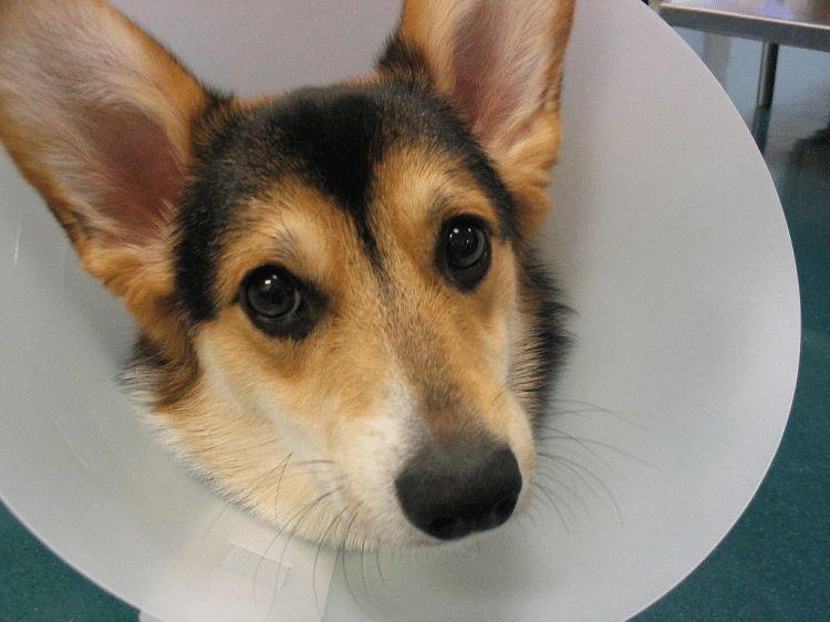 Alergias a los perros comunes: dolencias bebé de la piel que los dueños de mascotas deben conocer