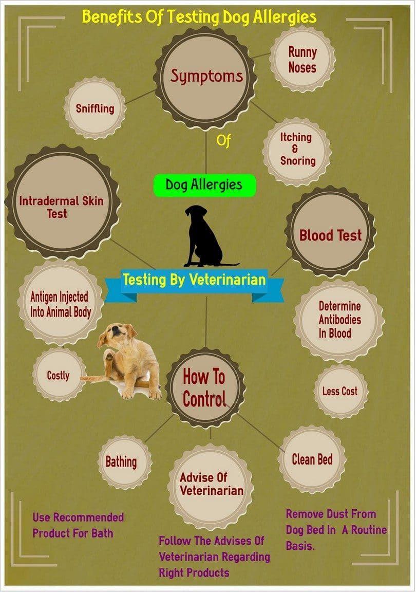 Comprobación de las alergias a los perros