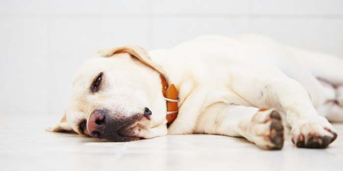 Tratamientos de la ansiedad del perro