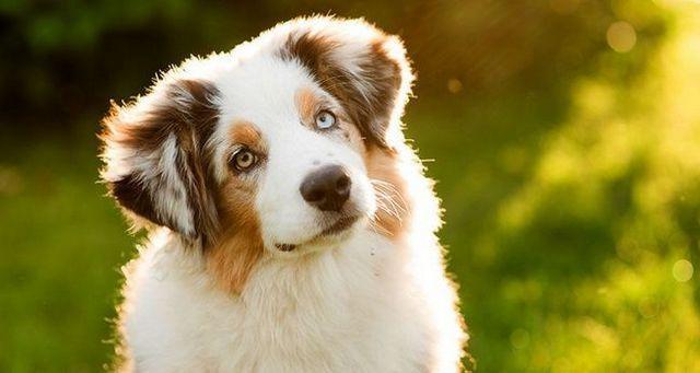 Comportamientos de perros comunes explicados