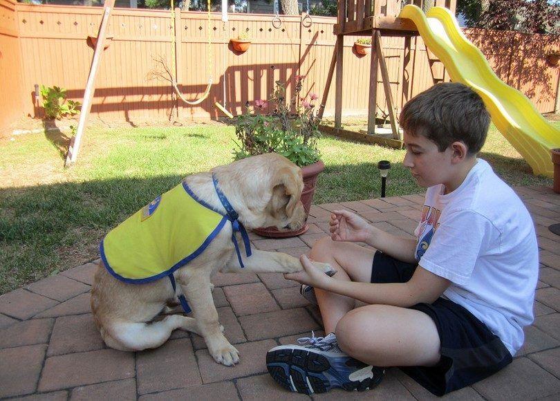 Perro entrena con un niño