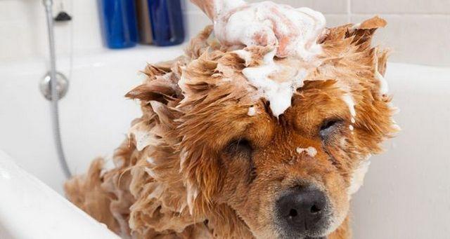 ¿Con qué frecuencia debo bañar un mi perro?