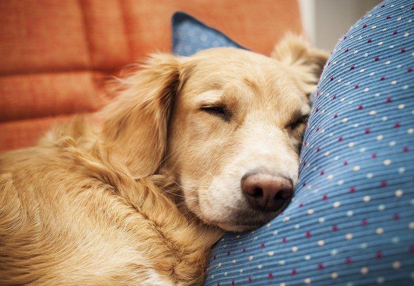 Insuficiencia cardíaca congestiva en perros: entender y reconocer los síntomas y causas