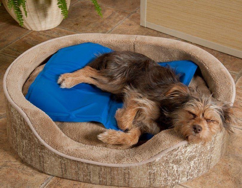 Enfriamiento cama del perro
