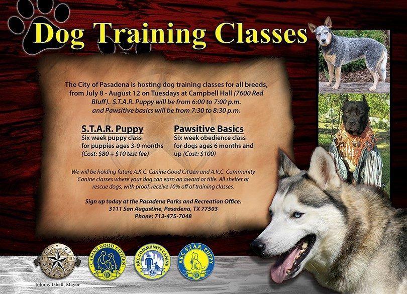 clases de entrenamiento para perros
