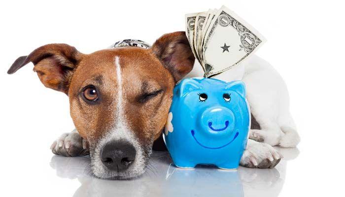 Ser propietario de coste de los perros
