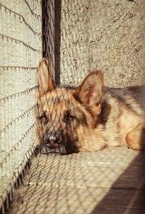 Ser propietario de un coste de compra de perro de un refugio