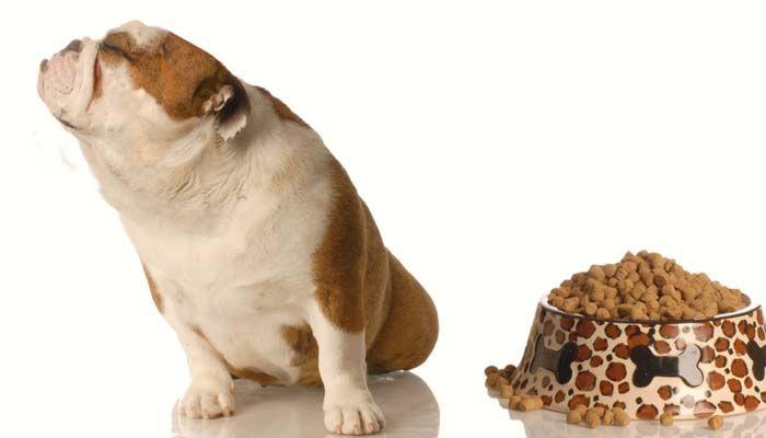 Coste de poseer un perro y comer a un perrito