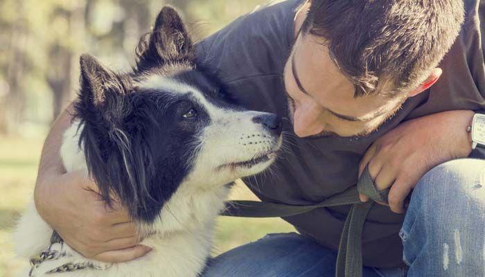 Los costos de perro propiedad