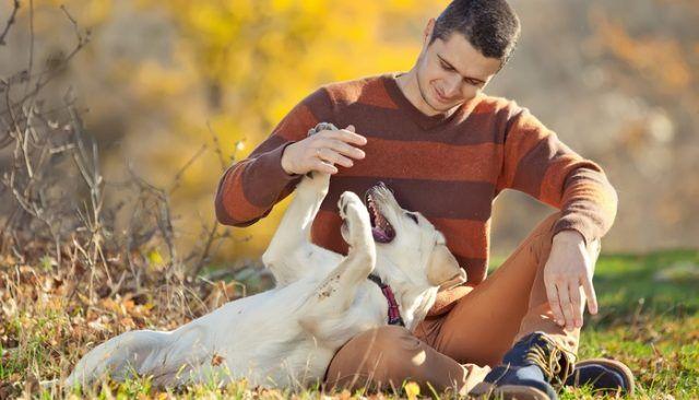 se puede hacer un perro tan feliz