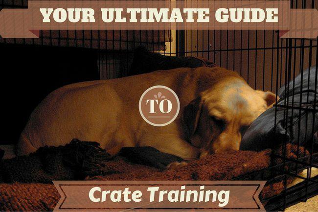 El entrenamiento del cajón - la última guía