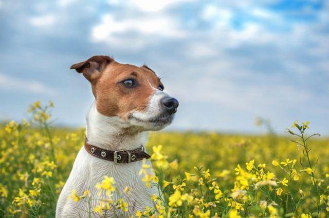 El tratamiento antiparasitario a su perro de forma natural