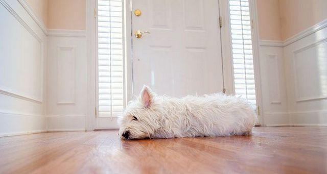 Hacer frente a la ansiedad de separaciГіn perro