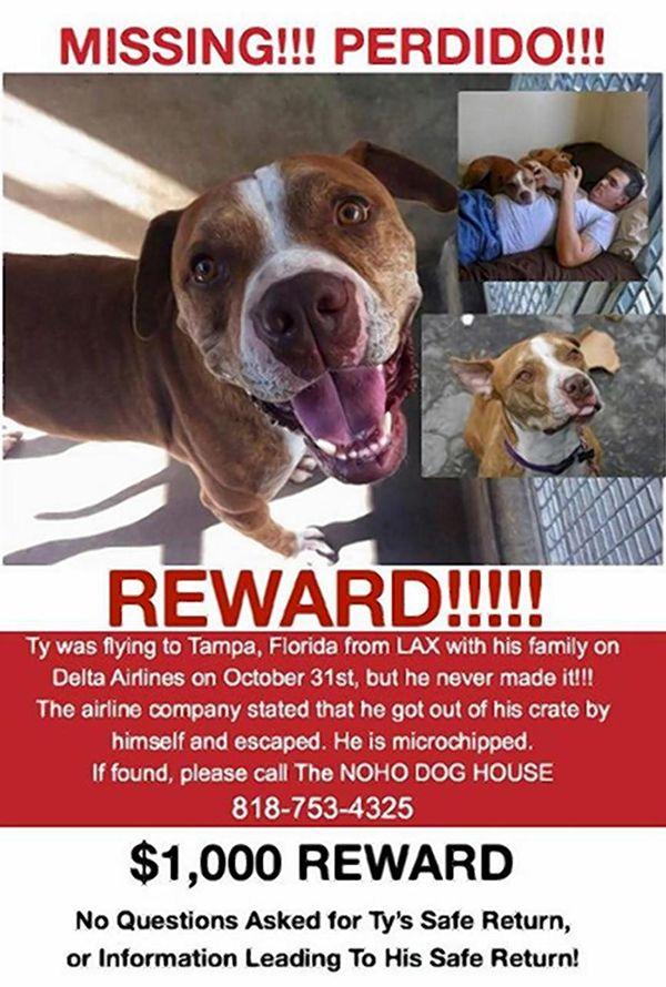 Las aerolíneas delta acusados de perder el perro en lax
