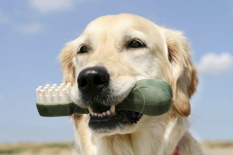 Las enfermedades dentales en los perros: lo que necesita saber acerca de la salud dental del perro