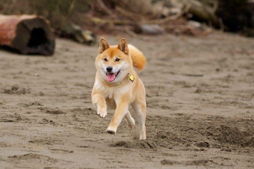 A largo plazo para el perro