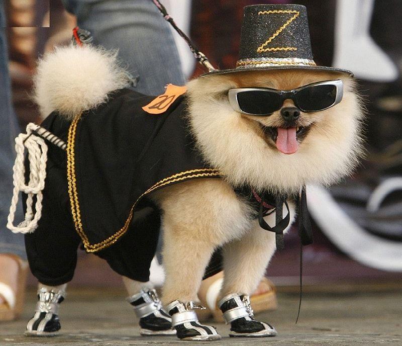 Diseñador de ropa para perros: cómo hacer que su mascota con estilo