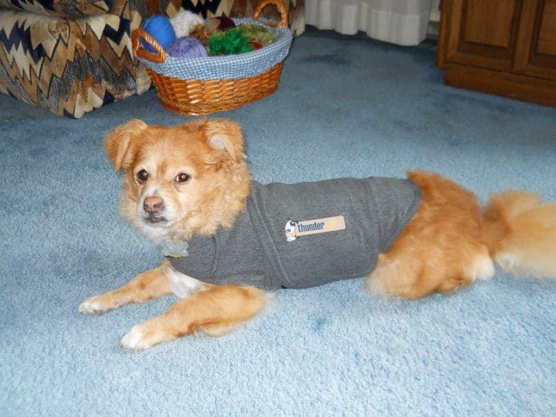 Solución Ansiedad Perro Thundershirt