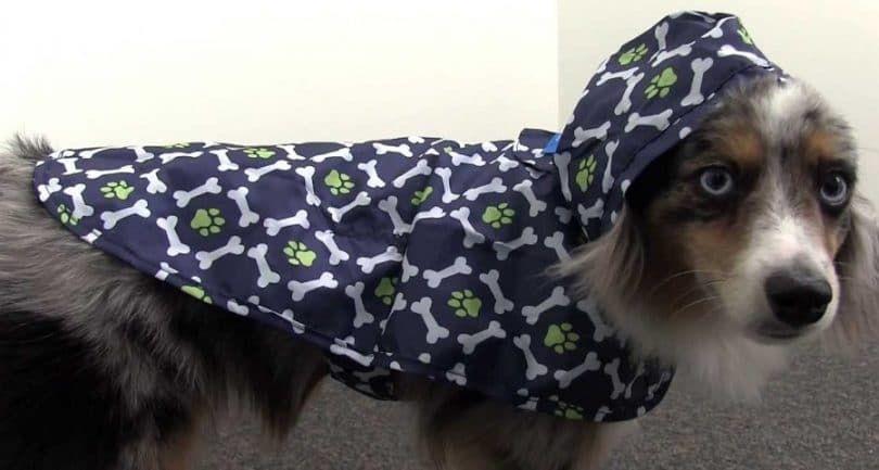 RC productos para animales de poco voluminoso perro Poncho de lluvia