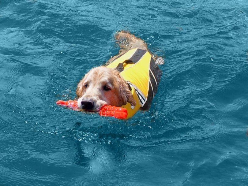 SeaDog Pro Chaleco salvavidas perro