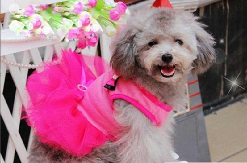 Ropa Escudo del perrito ropa de perro