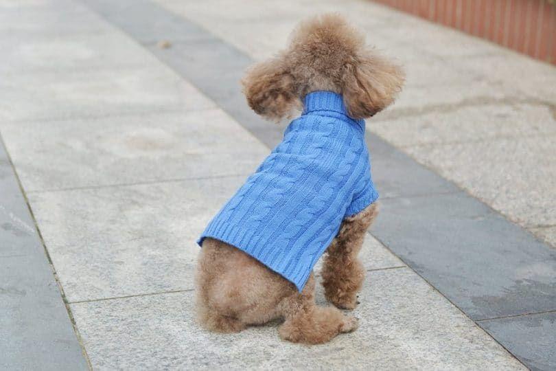Petta púrpura decente cuello alto suéter del perrito del perrito del gato