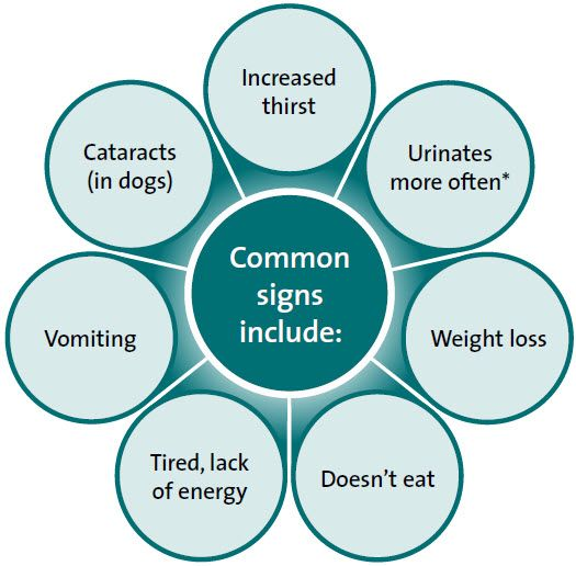 La diabetes en los perros, los síntomas, causas y tratamiento