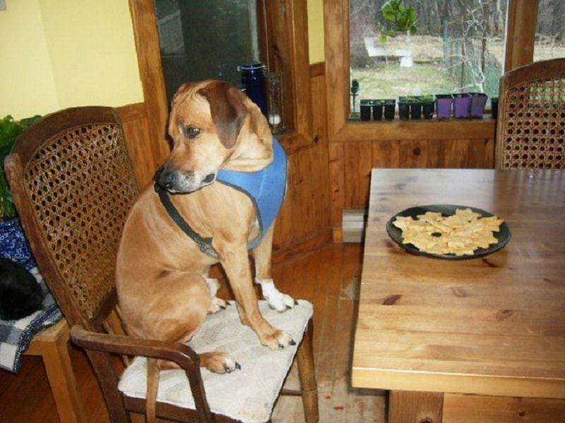 perro ganó`t eat