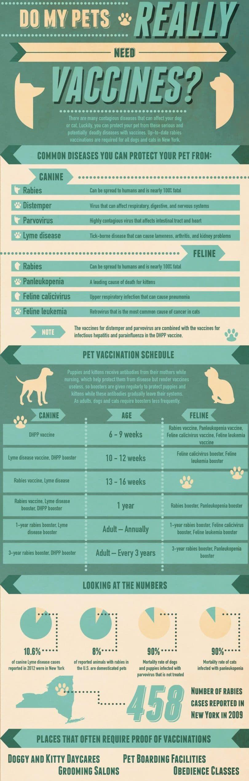 ¿Mis mascotas realmente necesitan vacunas
