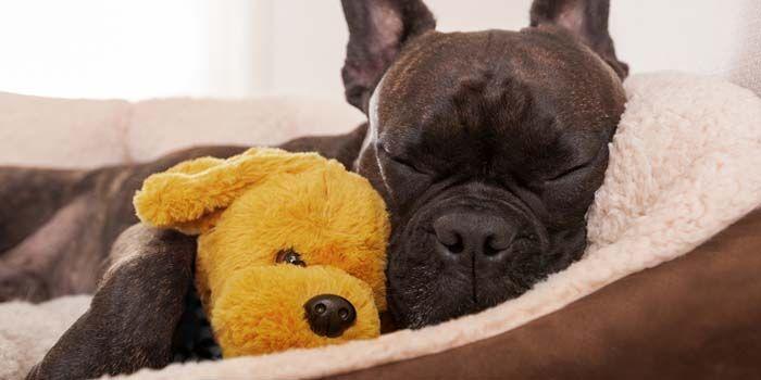 durmiendo en la cama en la casa de perro del perro