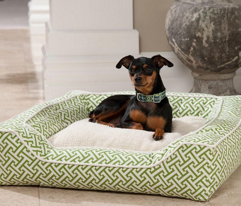 Bolster camas para perros