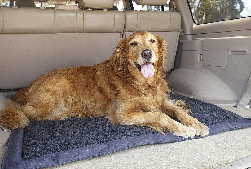 camas para perros de viajes