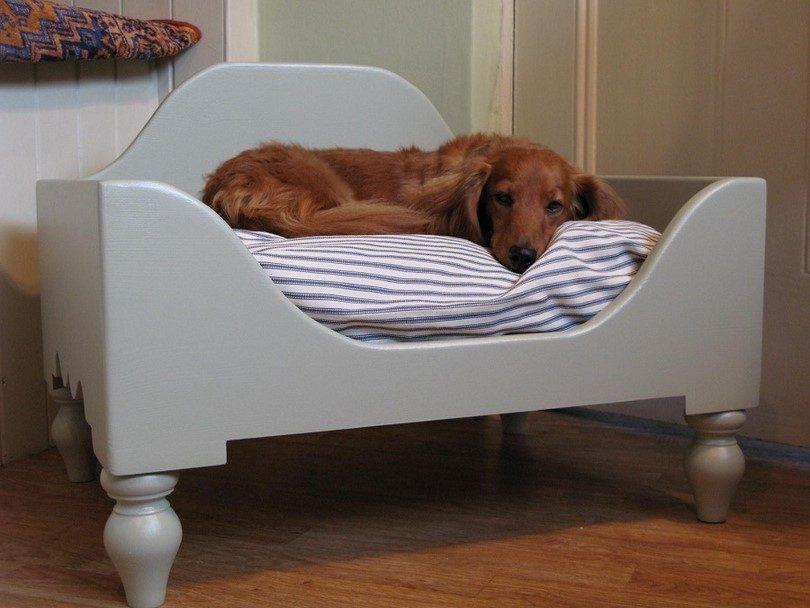 camas para perros planteadas