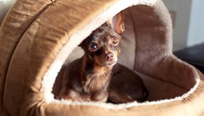 Perro de bricolaje Cama Proyecto - ideas de todo el Internet para un perro