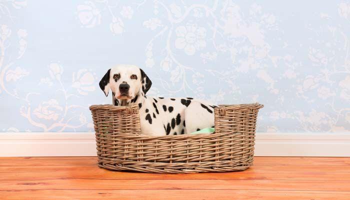 Proyecto cama del perro de bricolaje - ideas de todo el Internet para los animales domГ©sticos