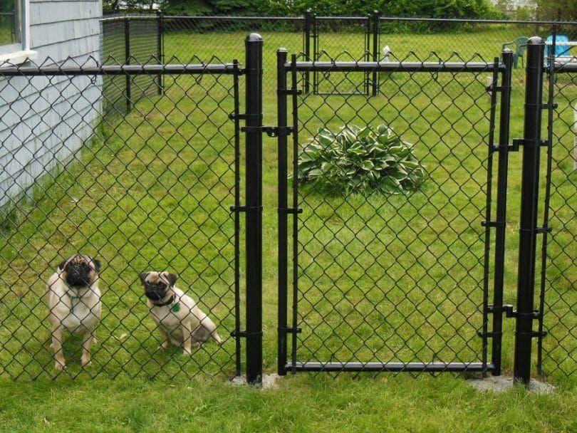 Los perros detrás de la cerca