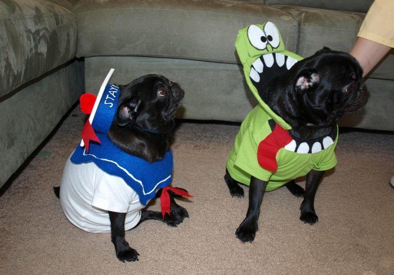 trajes del perro