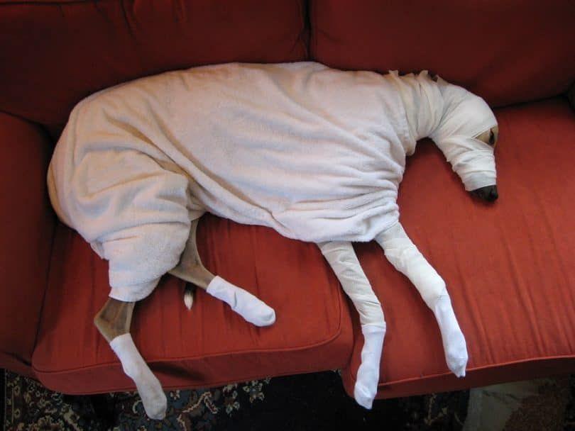 Hacer un disfraz de momia