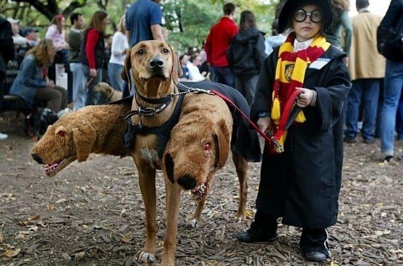 Hogwarts uniforme