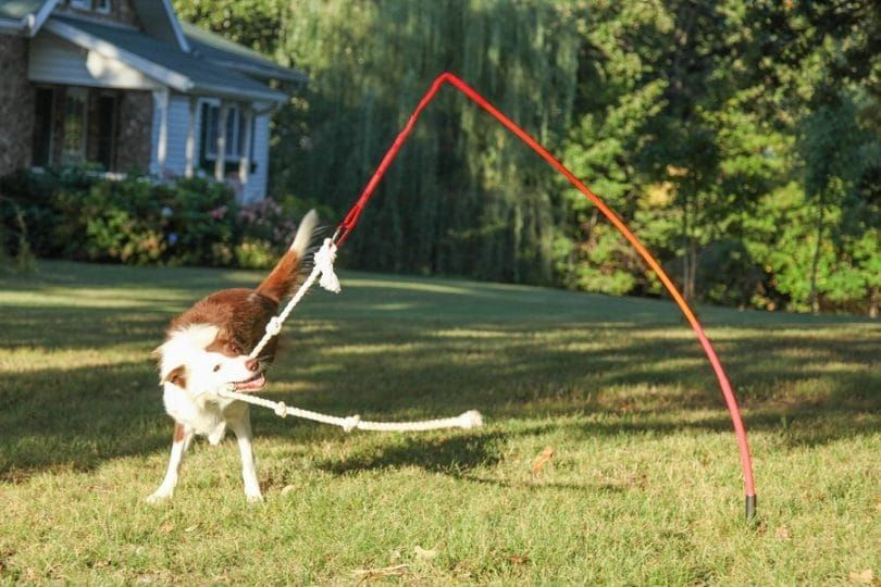 Aire libre juguete interactivo del perro
