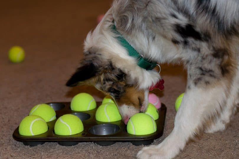 juego de puzzle perro