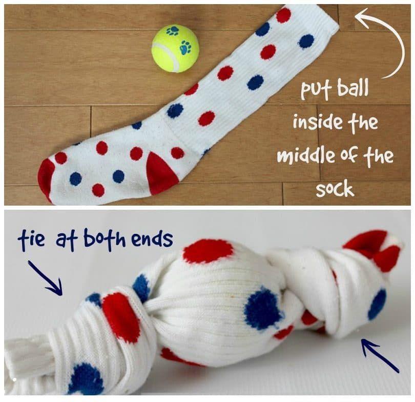 pelota para perros en casa