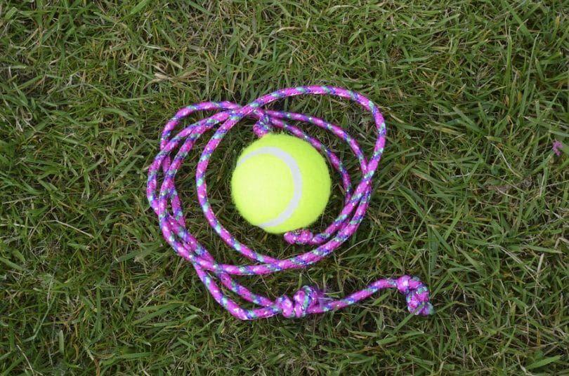 Juguete del perro con una pelota de tenis y cuerda